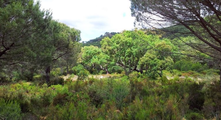 Monteria finca Barria